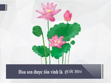 Bài giảng môn Ngữ văn lớp 11 - Tuần 29: Đọc thêm: Tiếng mẹ đẻ nguồn giải phóng các dân tộc bị áp bức - Nguyễn An Ninh